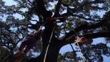 Anniversaire enfants dans les arbres à Montpellier