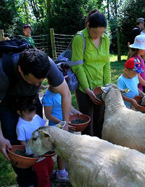 Une sortie pour les enfants, La Ferme Pédagogique de Saint Hilliers, les moutons.