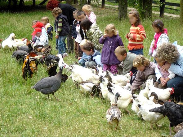 Une sortie pour les enfants, La Ferme Pédagogique de Saint Hilliers, les volailles.