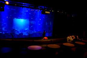 L'aquarium du Trocadéro de Paris, la salle de spectacle, le Lounge.