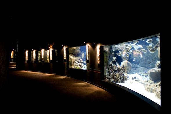 Parcs loisirs paris aquarium paris trocadero bassins d for Aquarium de paris jardin du trocadero