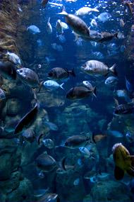 Reportage photos L'Aquarium du Trocadéro à Paris. Plus qu'un aquarium, un véritable parc de loisirs. CinéAqua axe ses activités vers les enfants. Une sortie pour vos enfants.