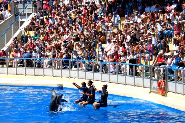 Les dauphins jouent sous l'oeil attentif de leurs dresseurs et de quelques centaines de spectateurs. Photos parc de loisirs aquatique Marineland.