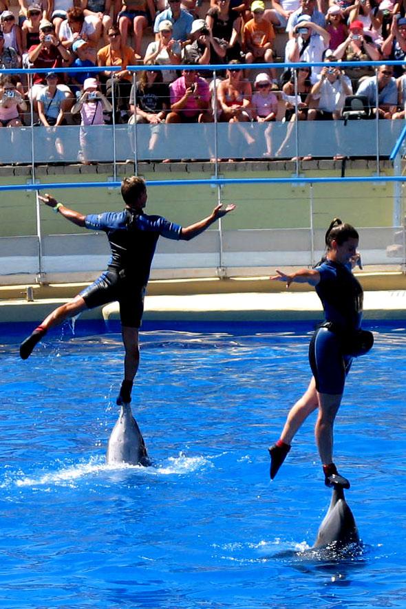 La complicité des dresseurs et des dauphins sous les yeux ravis du public. Photos parc de loisirs aquatique Marineland.