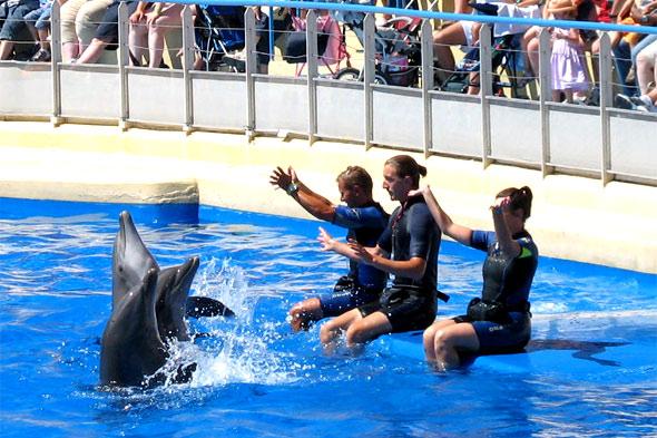 Gros plan sur les dauphins et leurs dresseurs. Photos parc de loisirs aquatique Marineland.