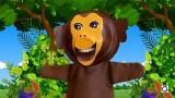 Fais des grimaces avec la marionnette singe